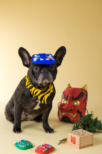 節分「French Bulldog Puppy and Setsubun」:スマホ壁紙(17)