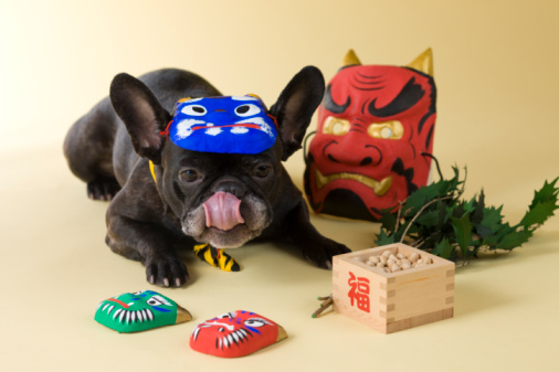 節分「French Bulldog Puppy and Setsubun」:スマホ壁紙(6)