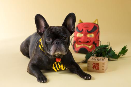 節分「French Bulldog Puppy and Setsubun」:スマホ壁紙(18)