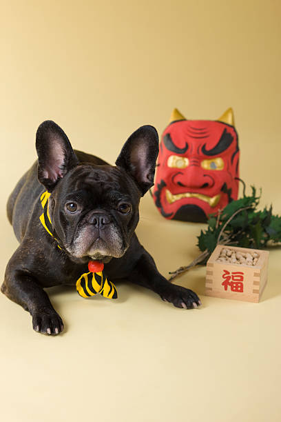 French Bulldog Puppy and Setsubun:スマホ壁紙(壁紙.com)