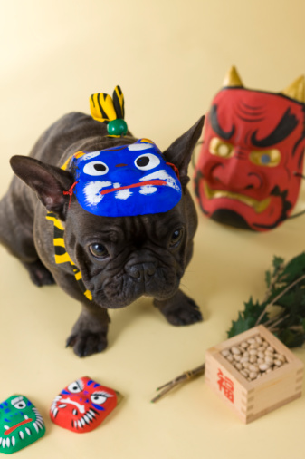 節分「French Bulldog Puppy and Setsubun」:スマホ壁紙(15)