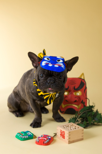 節分「French Bulldog Puppy and Setsubun」:スマホ壁紙(14)
