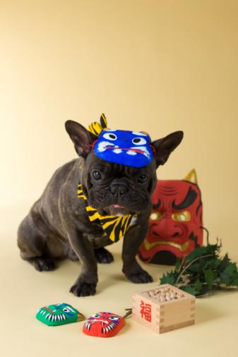 節分「French Bulldog Puppy and Setsubun」:スマホ壁紙(16)