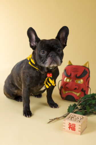 節分「French Bulldog Puppy and Setsubun」:スマホ壁紙(16)