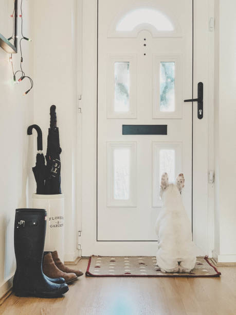 French Bulldog waiting patiently for postman by the front door:スマホ壁紙(壁紙.com)