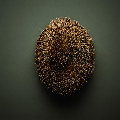 ハリネズミ「Hedgehog (Erinaceus europaeus), overhead view」:スマホ壁紙(18)