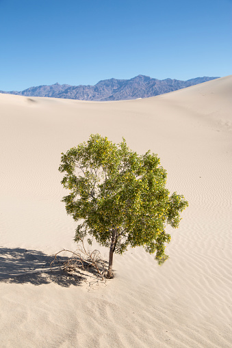 Lost「Lone tree Death Valley, California, USA」:スマホ壁紙(9)