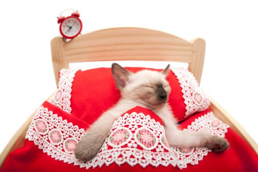 子猫「お目覚めアップ」:スマホ壁紙(4)