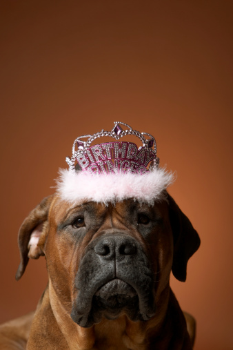 Frowning「Dog with birthday crown on head」:スマホ壁紙(4)
