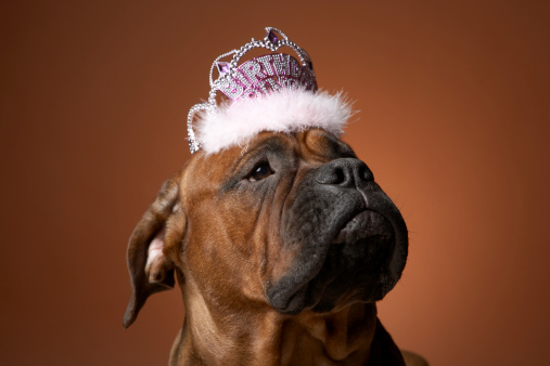 Frowning「Dog with birthday crown on head」:スマホ壁紙(14)