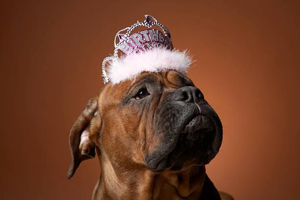Dog with birthday crown on head:スマホ壁紙(壁紙.com)