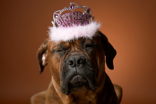 Frowning「Dog with birthday crown on head」:スマホ壁紙(15)