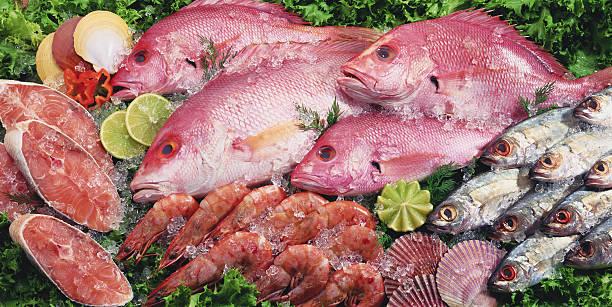 Fresh Fish:スマホ壁紙(壁紙.com)