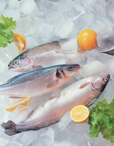 Fresh fish on ice decorated with greens:スマホ壁紙(壁紙.com)