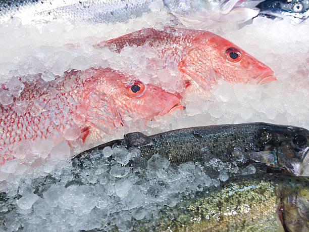 Fresh fish at fish market:スマホ壁紙(壁紙.com)