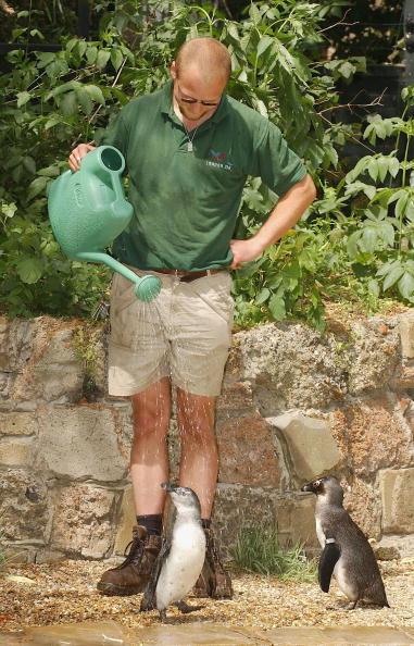 Steve Finn「UK: London Zoo's Penguins Are Cooled As Hot Weather Hits」:写真・画像(16)[壁紙.com]