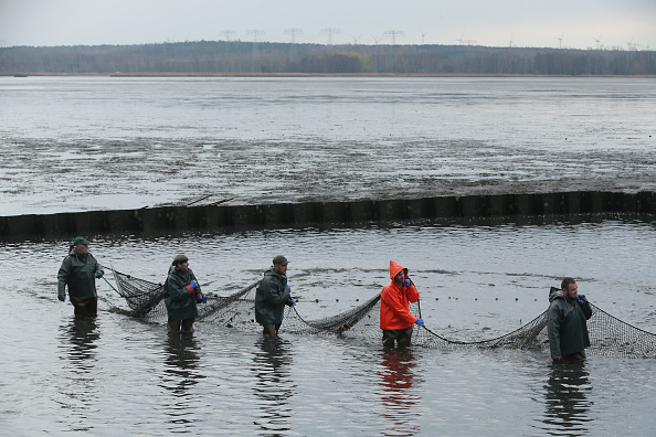 Fisherman「Fisheries Harvest Christmas Carp」:写真・画像(4)[壁紙.com]