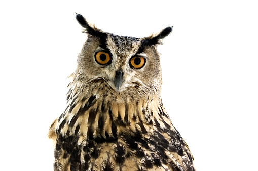 Beak「Owl watching in camera」:スマホ壁紙(10)