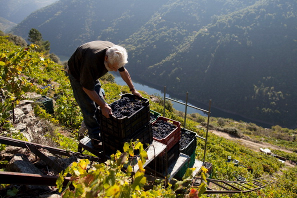Homemade「The Grape Harvest Is Gathered In On The Slopes Surrounding The Sil River」:写真・画像(16)[壁紙.com]