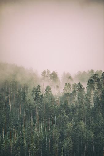 Rain「Fog and clouds on mountain」:スマホ壁紙(15)