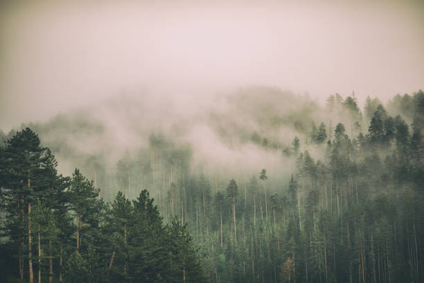 Fog and clouds on mountain:スマホ壁紙(壁紙.com)