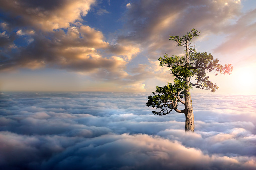 Single Tree「Tree above clouds」:スマホ壁紙(6)