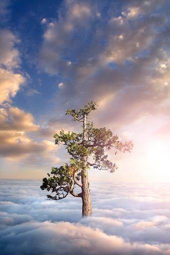 Single Tree「Tree above clouds」:スマホ壁紙(7)