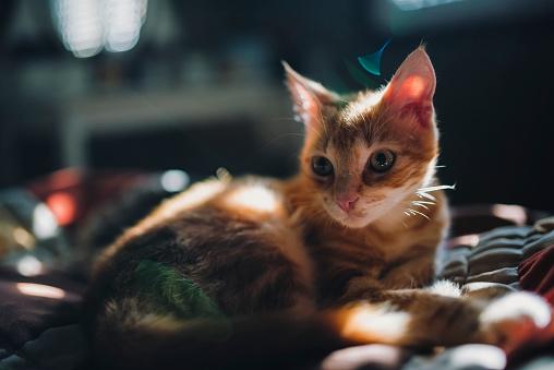 子猫「Kitten lying on bed」:スマホ壁紙(4)