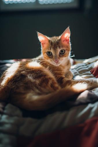 子猫「Kitten lying on bed」:スマホ壁紙(5)