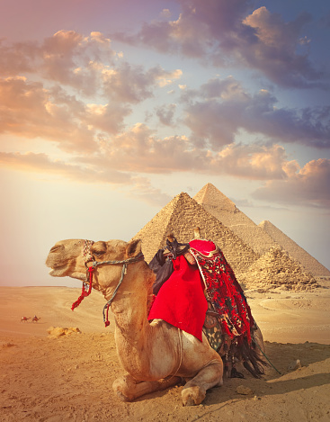 Ancient Civilization「Egyptian camel and the pyramids in Giza」:スマホ壁紙(7)