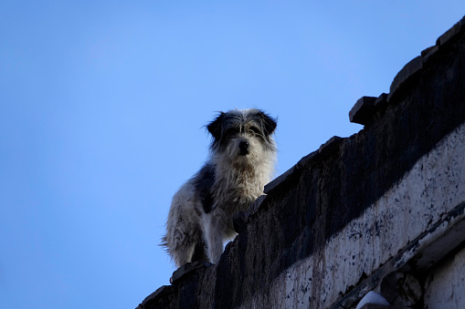 犬「Dog on the roof of a village house, Ladakh, India」:スマホ壁紙(10)
