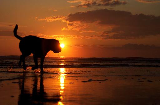 Ijmuiden「Dog on the beach」:スマホ壁紙(5)