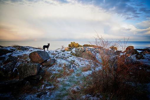 虹「冬の岩の上に犬。」:スマホ壁紙(9)