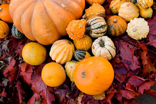 Harvest Festival「Gourds and autumn leaves」:スマホ壁紙(8)