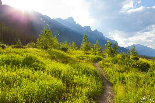 Sunny「A view of a singletrack trail for mountain bikers, hikers and runners at the Canmore Nordic Centre in Canmore, Alberta, Canada.」:スマホ壁紙(8)