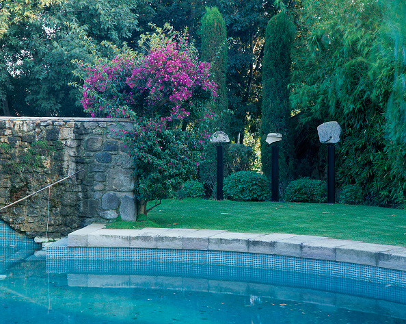 Grass「View of a swimming pool surrounded by plant life」:写真・画像(14)[壁紙.com]