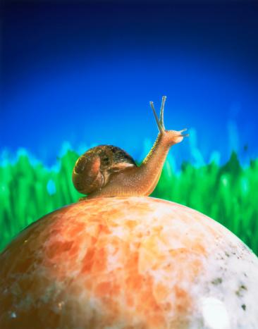 snails「Snail on a marble sphere」:スマホ壁紙(9)