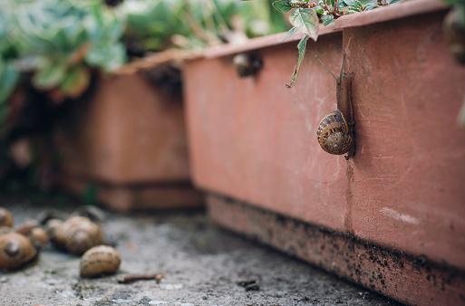 カタツムリ「Snail on a flower box」:スマホ壁紙(16)