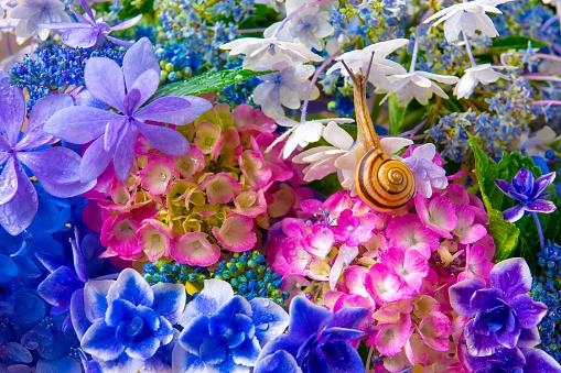 カタツムリ「Snail on a Hydrangea」:スマホ壁紙(14)