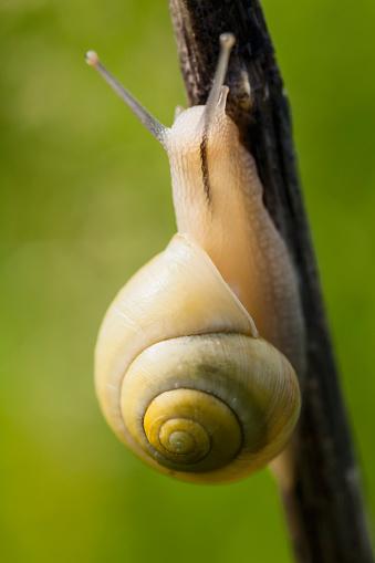 Montérégie「Snail on a plant stem」:スマホ壁紙(4)