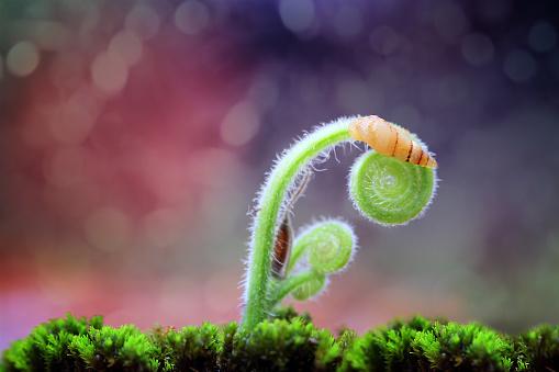 カタツムリ「Snail on a plant, Indonesia」:スマホ壁紙(18)