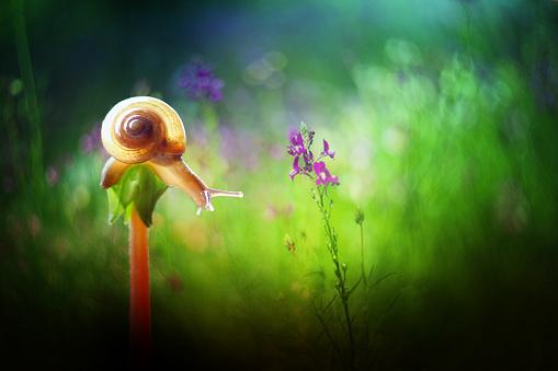 カタツムリ「Snail on a plant, Indonesia」:スマホ壁紙(7)