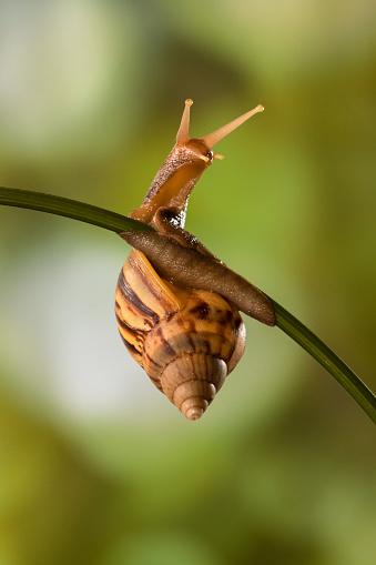 snails「Snail on a plant, Indonesia」:スマホ壁紙(17)