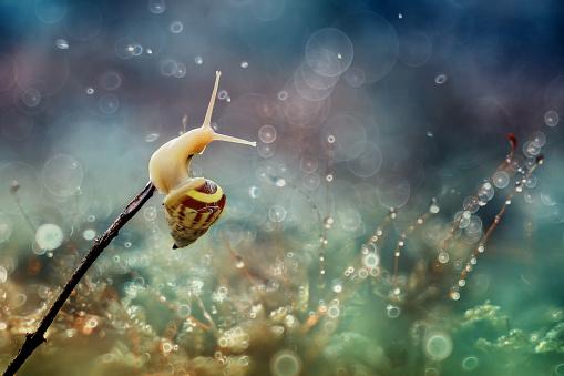 カタツムリ「Snail on a twig」:スマホ壁紙(2)