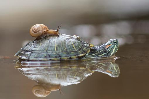 カタツムリ「Snail on a turtle, Jakarta, Indonesia」:スマホ壁紙(11)