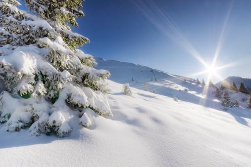 Single Tree「Powder Snow Paradise」:スマホ壁紙(2)