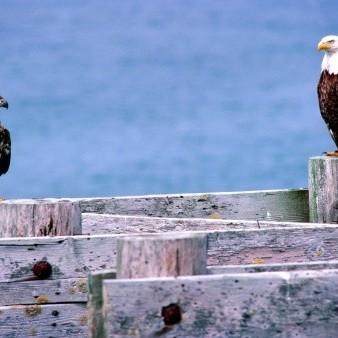 フォックス諸島の写真・画像 検...