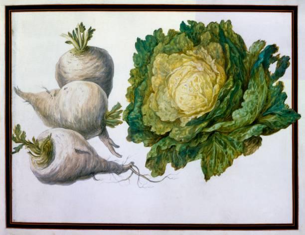 Turnip:ニュース(壁紙.com)