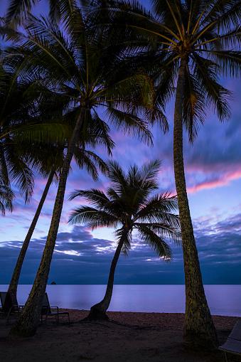 リゾート「オーストラリア、クイーンズランド州パーム コーブで夜明け」:スマホ壁紙(18)