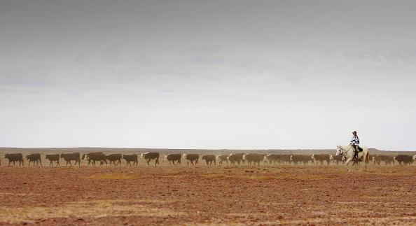 Horizon「Great Australian Cattle Drive Nears Completion」:写真・画像(9)[壁紙.com]